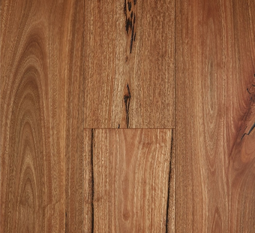 Spotted Gum Rustic 500x456