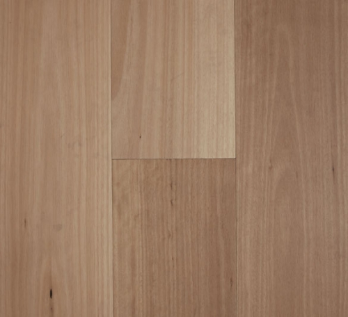 Blackbutt Matt 500x456